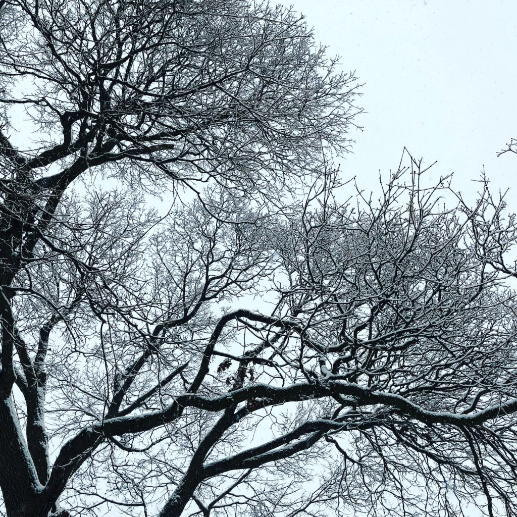 Icy trees, Parc Outremont, Montreal, QC